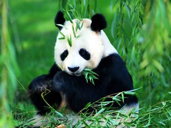 【旋风壹号】九寨沟+熊猫基地双飞五日